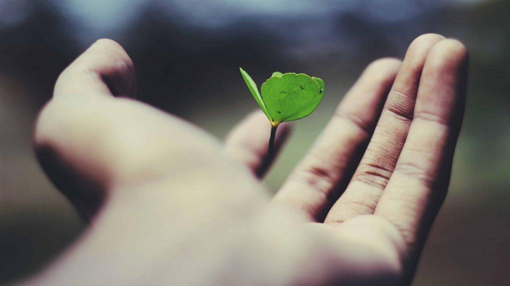 New Life, Hope, Plants